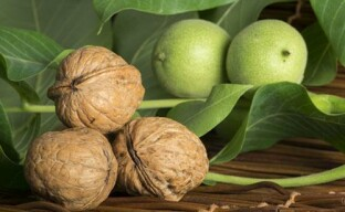 Ошибки при выращивании грецкого ореха