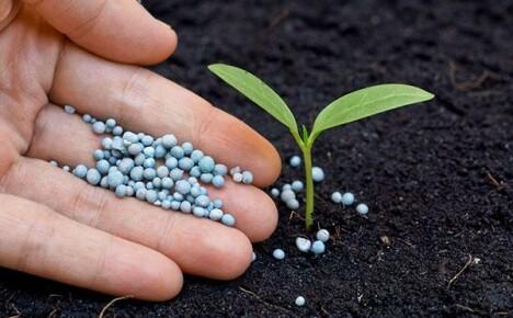 Грунты и удобрения – что и как применять