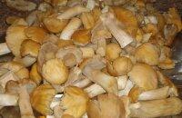 Оригинальная закуска к празднику и не только — рецепт маринованных грибов курочек