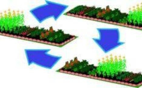 Севооборот на огороде — оптимальное чередование растений