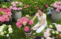 Как ухаживать за гортензией: особенности выращивания садового и комнатного растения
