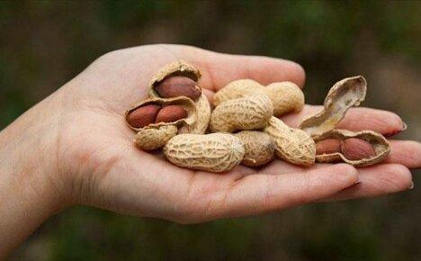Нормы потребления, калорийность, польза и вред арахиса