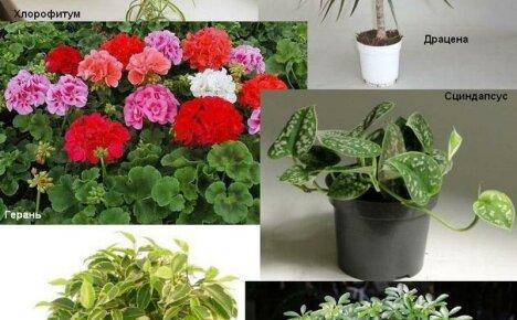 Подборка 10 полезных комнатных растений