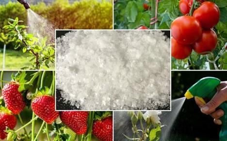 Разнообразное применение борной кислоты в огородничестве и садоводстве