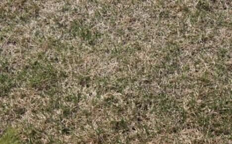 Восстанавливаем газон после зимы с помощью аммиачной селитры