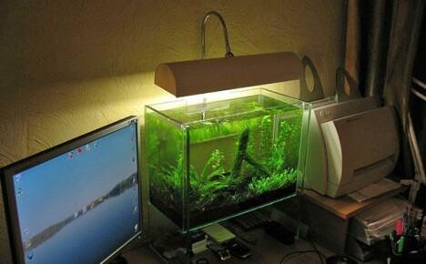 Зачем нужна подсветка аквариума и как правильно ее выбрать