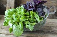 Чем полезен базилик — целебная травка из грядки под окном