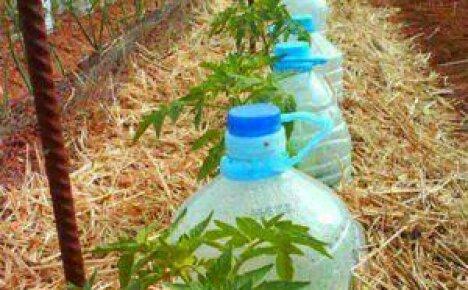 Как организовать полив огорода своими руками?