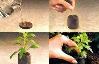 Как сажать семена в торфяные таблетки и чем они хороши