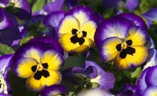 Выбираем яркие многолетние цветы для дачной клумбы