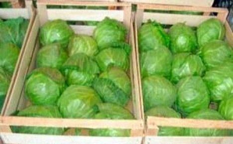 Популярные способы длительного хранения капусты