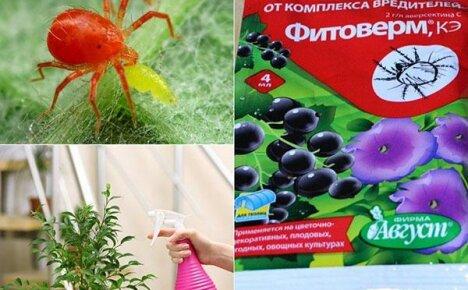 Инструкция по применению Фитоверма при выращивании овощей и цветов