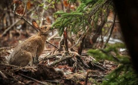 Как избавиться от зайцев на даче
