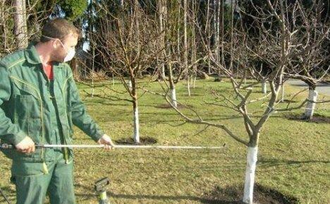 Когда весной нужно обрабатывать садовые деревья?