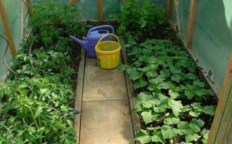 Магниевые удобрения для томатов, огурцов и картофеля
