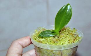 Как использовать мох сфагнум для цветов