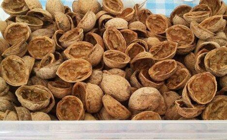 Скорлупа грецкого ореха: применение в народной медицине, в саду и в хозяйстве