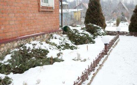 Приятные декабрьские хлопоты в цветнике и возле комнатных растений