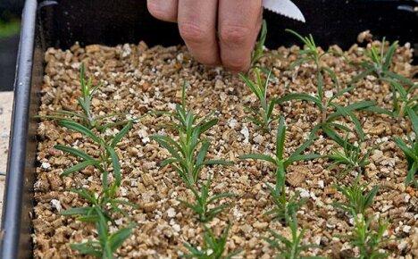 Как применять вермикулит для растений, чтобы получить хороший результат