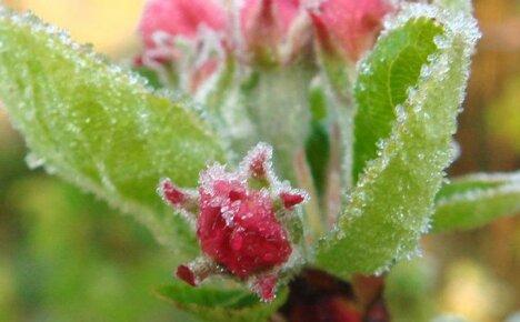 Эффективная защита растений от непредсказуемых весенних заморозков