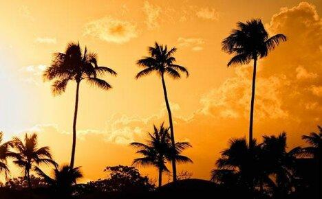 Фото с названиями видов домашних пальм