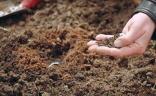 Сроки посадки кабачков на грядки
