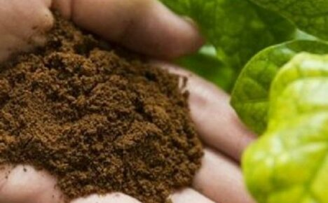 Удобрения для цитрусовых в домашних условиях своими руками