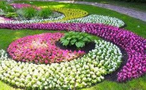 Как выбрать низкорослые цветы для клумбы
