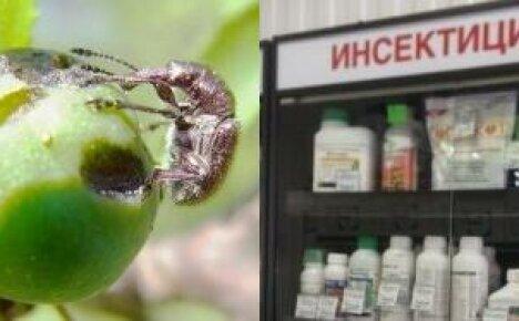 Обрабатываем сад инсектицидами — список популярных препаратов