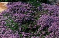 Какие растения забивают сорняки: небольшая подборка зеленых помощников для дачника