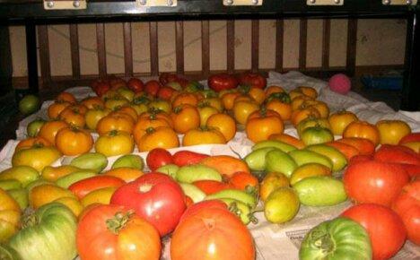 Свежие помидоры со своих грядок сохранить до Нового года можно