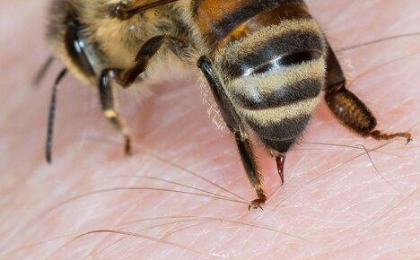 Показания к применению апитерапии – что лечат пчелиные укусы