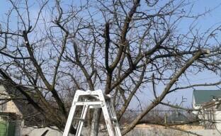 Обрезка яблони, формирование кроны дерева