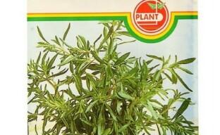 Чабер: посев семян на рассаду – когда и как высевать пряную травку