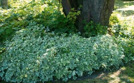 Альтернатива газону — чем можно заменить газон?