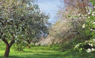 Совместимость и симбиоз плодовых деревьев