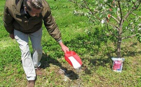 Весенняя подкормка плодовых кустарников и деревьев