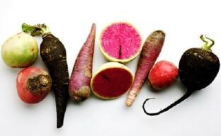 Разновидности редьки или как правильно выбрать вкусный корнеплод