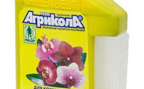 Какие удобрения можно применять для орхидей?