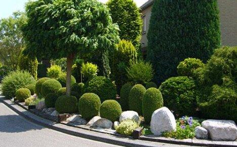 Представляем вашему вниманию фото и описание разных видов самшитового дерева