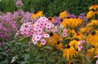 Какие многолетники цветут все лето — подборка растений для летнего сада
