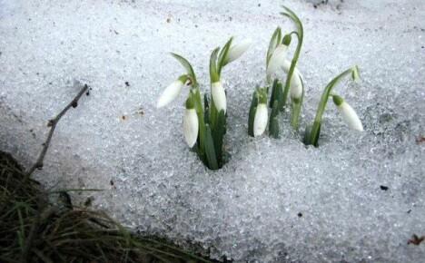 Мартовские хлопоты на цветочных клумбах: что нужно делать с комнатными и садовыми цветами