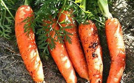 Обзор лучших сортов моркови с фотографиями