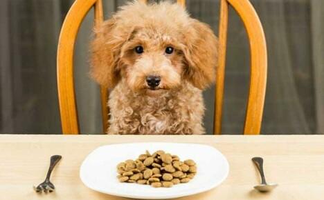 Классификация и критерии выбора корма для собак