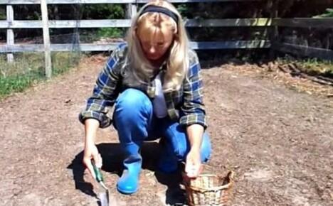 Как выращивать чеснок (это очень просто!)