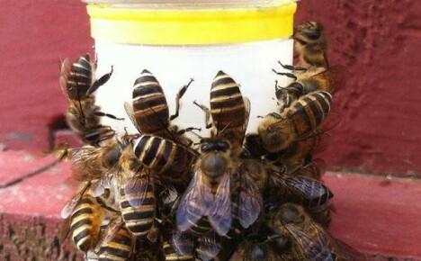 Пчеловодам в помощь поилка для пчел из Китая