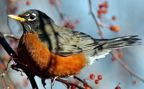 Птицы в саду