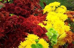 Цветы в саду и огороде