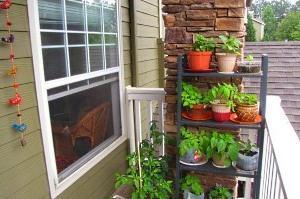 Как организовать огород на балконе