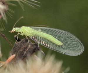 Какие есть полезные насекомые для огорода?